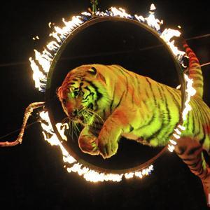 Цирки Исетского