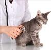 Ветеринарные клиники в Исетском
